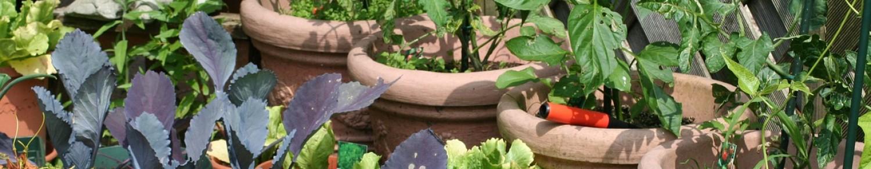 Connaissez-vous les jardins partagés ?
