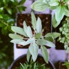 Rempoter mes plantes d'intérieur