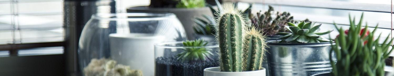 Entretenir mes plantes d'intérieur