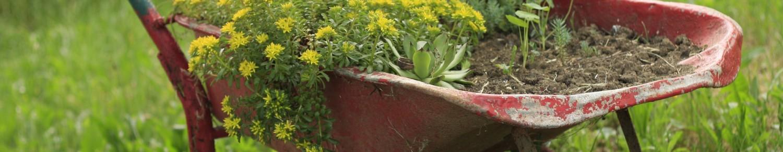 Le jardinage : une passion accessible à tous !