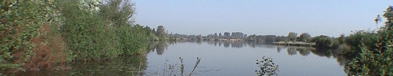 Le marais de Saint Omer