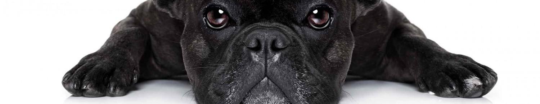 Un chien pour lutter contre la sédentarité