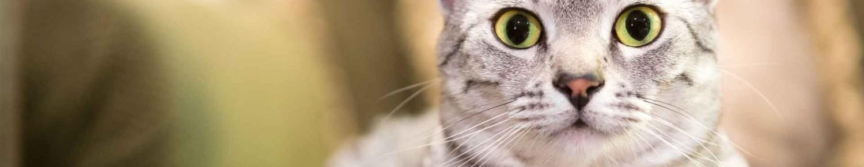 Un chat, c'est un cœur… et des dents à surveiller