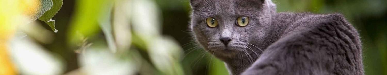 Un chat aux quenottes toutes propres !