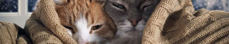 Echaudé ou non, le chat ne craint pas le froid
