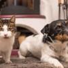 Chiens et chats : les petits tourments de l'automne