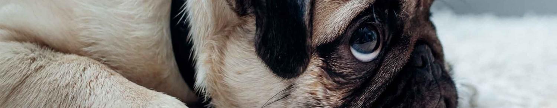 La punition du chien… avec discernement