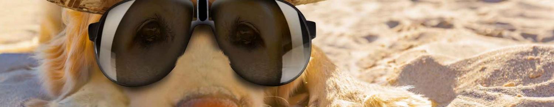 Mon chien à la plage