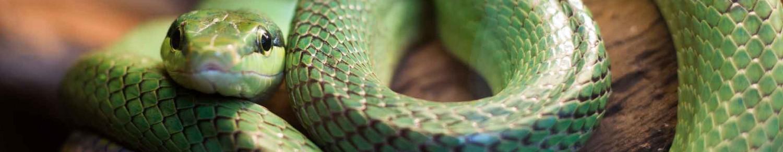 Un serpent dans la maison !