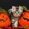 Pourquoi célèbre-t-on Halloween?